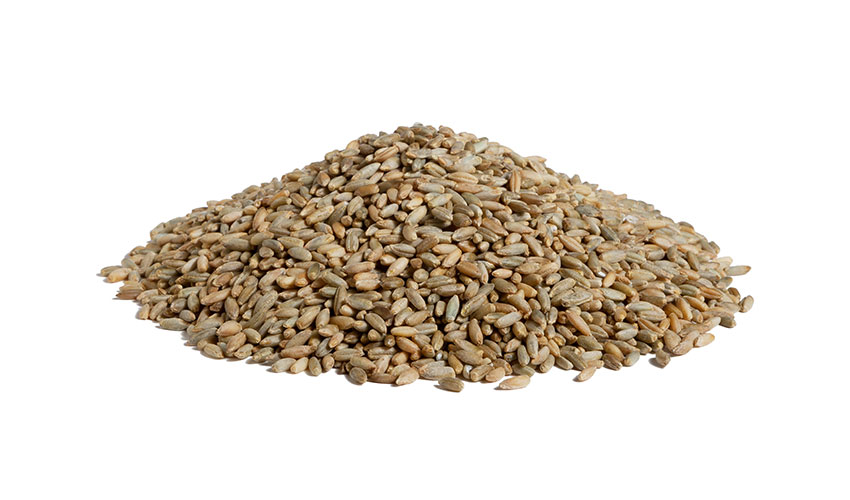 RYE - Rye is a mountain cereal, rich in nutritional features and with a lower content of proteins respect to the wheat. Traditionally used as flour for bakery, its grains can be the main ingredient of savory soups.