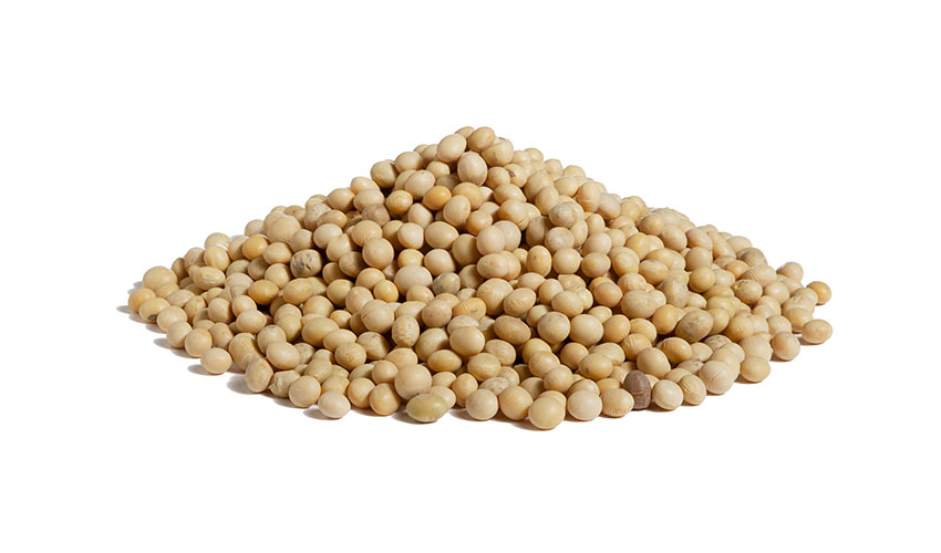 "SOY - It's an herbaceous plant belonging to the legume species. Known also like the ""Japanese bean"" it has a high nutritional value and it's used in several and different food preparations like flours, milk, tofu or seeds and sprouts. Naturally gluten free it's ideal for preparing soups or salads."